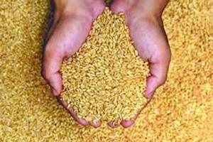 gam-www.jatirkhantha.com.bd
