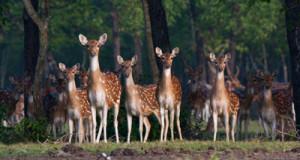 nijumdip-www.jatirkhantha.com.bd