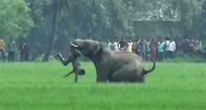 banno hati-www.jatirkhantha.com.bd
